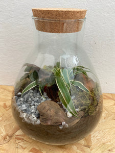 Pyramid Closed Terrarium