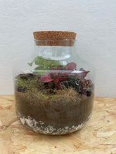 Load image into Gallery viewer, Milk Churn Closed Terrarium