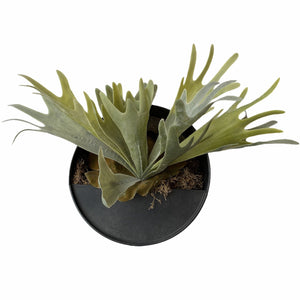 products/faux-staghorn-fern-in-hanging-container-484524.jpg