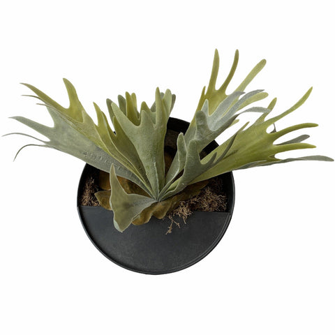 Faux Staghorn Fern In Hanging Container - Lady of the Lake
