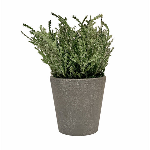 Frosted Juniper Plant Pot - Lady of the Lake