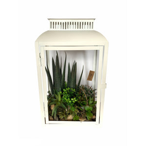 products/large-lantern-with-succulent-arrangement-911845.jpg