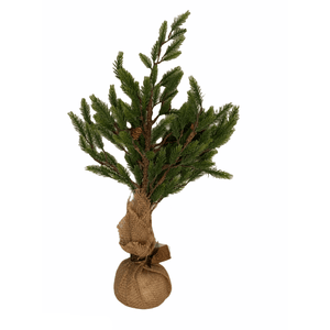 Spruce Tree In Burlap Sack - Lady of the Lake