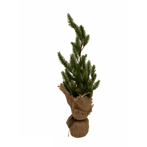 products/spruce-tree-in-burlap-sack-741981.png