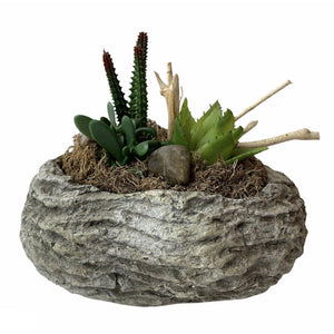 Succulent Arrangement In Cement Container - Lady of the Lake
