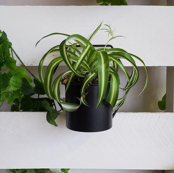 Black Hanging Geometric Planter With Plant