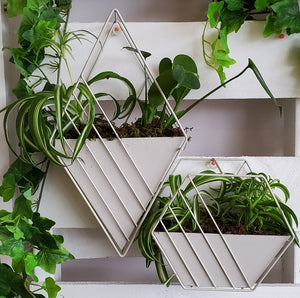 Geometric Planters With Plants