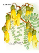 Load image into Gallery viewer, Kowhai Tincture 1:5 100ml
