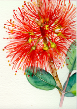 Load image into Gallery viewer, Pohutukawa  Tincture 1:5 100ml