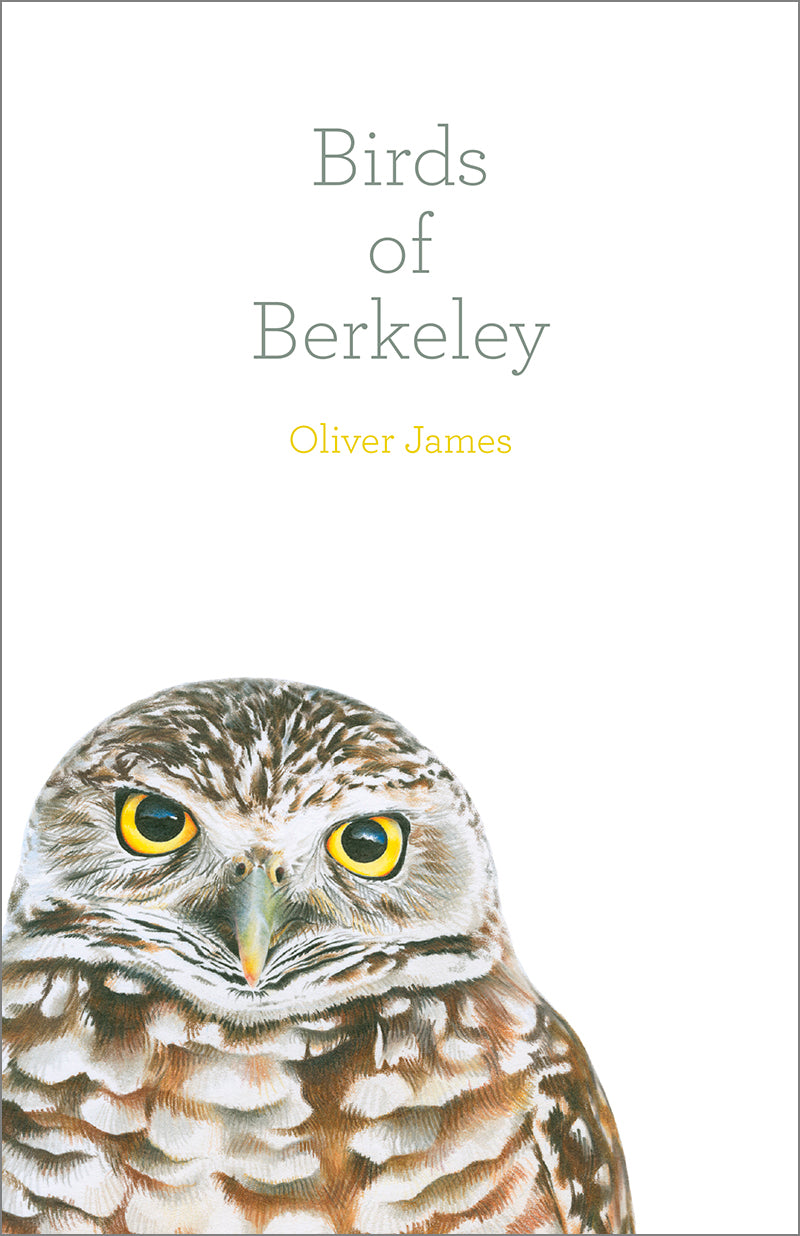 Birds of Berkeley