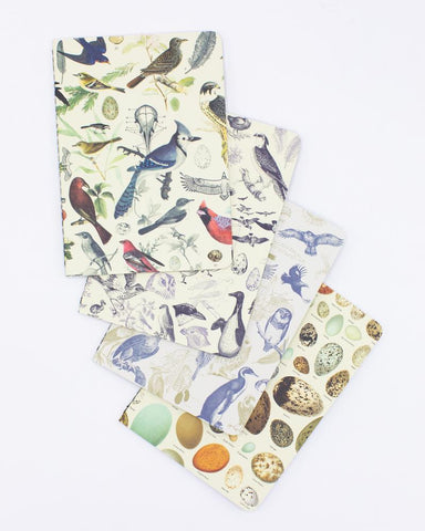 Birds: Ornithology Pocket Notebook 4-pack