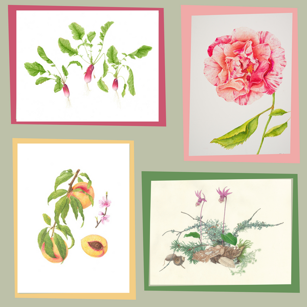 Plants Illustrated 2021 Notecards - Set of 4