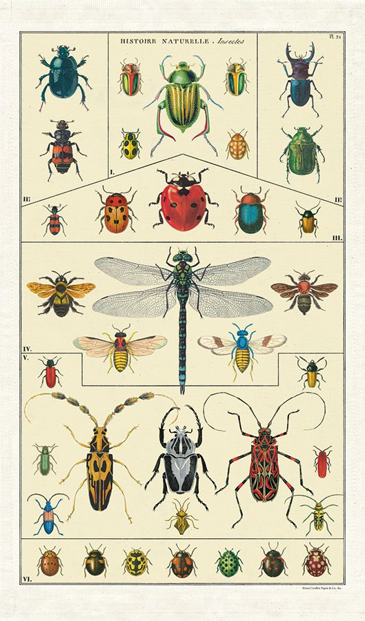 Insects Kitchen Towel