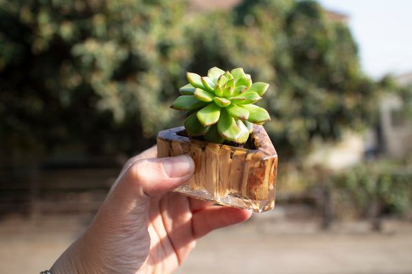 Resin succulent planter made with woodchips mulched in Sun Joe woodchipper
