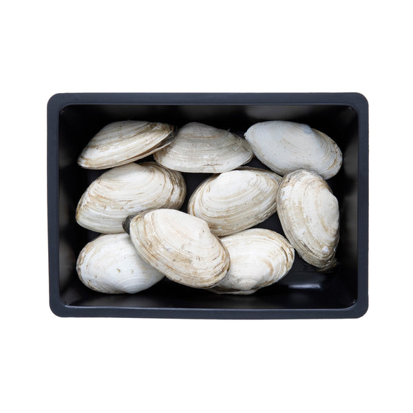Clams Maine Steamers
