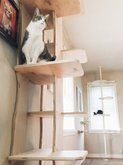 cat tower cat tree