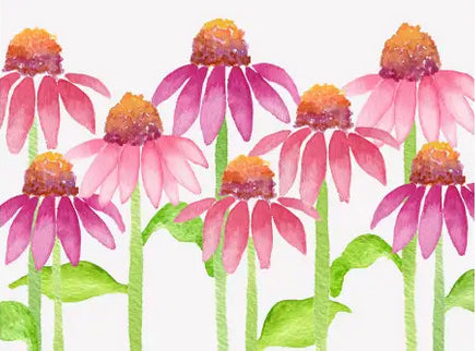 Cone Flower Floral - Blank boxed notes