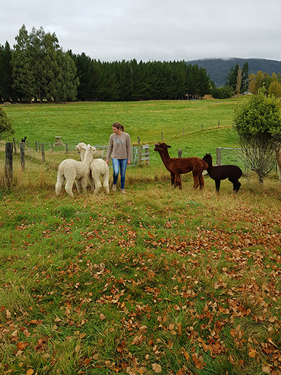 Alpacas on our farm