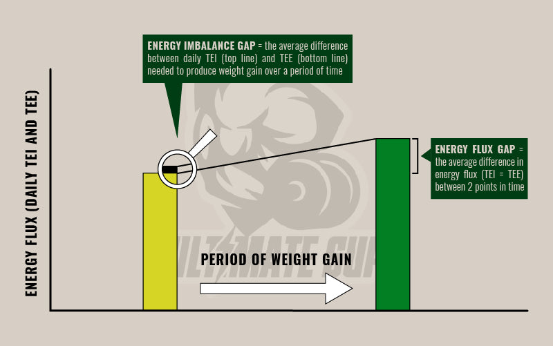 How does fat loss work - Ultimate Sup