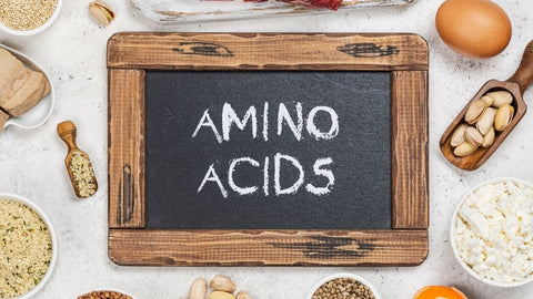 Provide Essential Amino Acids
