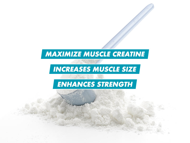Increase Muscle Size & Strength Premium Cell Tech Creatine For Maximum Muscle Creatine Formulated for Hardgainers MuscleTech Cell Tech Hardcore - A Must Have For Hard Gainers MuscleTech Cell Tech Hardcore includes a high-tech creatine compound for hard gainers who have difficulties putting on strength and growth. This recipe comprises essential elements supported by over 30 clinical research studies over several decades. Faster Muscle Growth Every two-scoop MuscleTech Cell Tech Hardcore effectively allows 7g of HPLC-certified creatine monohydrate and 3g of Creatine HCl. Those that consumed this Cell Tech creatine and carbs during the loading phase of the Cell Tech system exhibited considerable strength improvements. Increased Strength Furthermore, participants taking Cell Tech creatine and carbohydrates dramatically boosted their resistance to the bench press, leg press and biceps curl, according to another study. Improved transport of nutrient Each two-scoop MuscleTech Cell Tech Hardcore serving has 200 mg of the potent lipoic acid compound (ALA). Research indicates that ALA helps to increase creatine and glucose absorption into the muscle cell via certain transportation compounds. More size and fullness of muscle Cell Tech provides a multi-stage carbon mixture that strengthens a strong pick-up after training. It supports the transfers of creatines and other nutrients into the muscle, quickly recharges glycogen reserves, facilitates compensation with glycogen, and a substantial muscle expansion. Branched Chain and Cell-Volumizing Amino Acids Amino acids, connected chain and cell volumes Cell Tech also delivers L-leucine, L-valine and L-isoleucine in the 2:1:1 ratios of branched-chain amino acids. Moreover, taurine and alanine are also present in MuscleTech Cell Tech Hardcore. These free-form amino acids are two of the most prevalent muscle acids that enhance cell capacities. Suggested Use Take 1 scoop of MuscleTech Cell Tech Hardcore with 6 oz. (177mL) of water imm