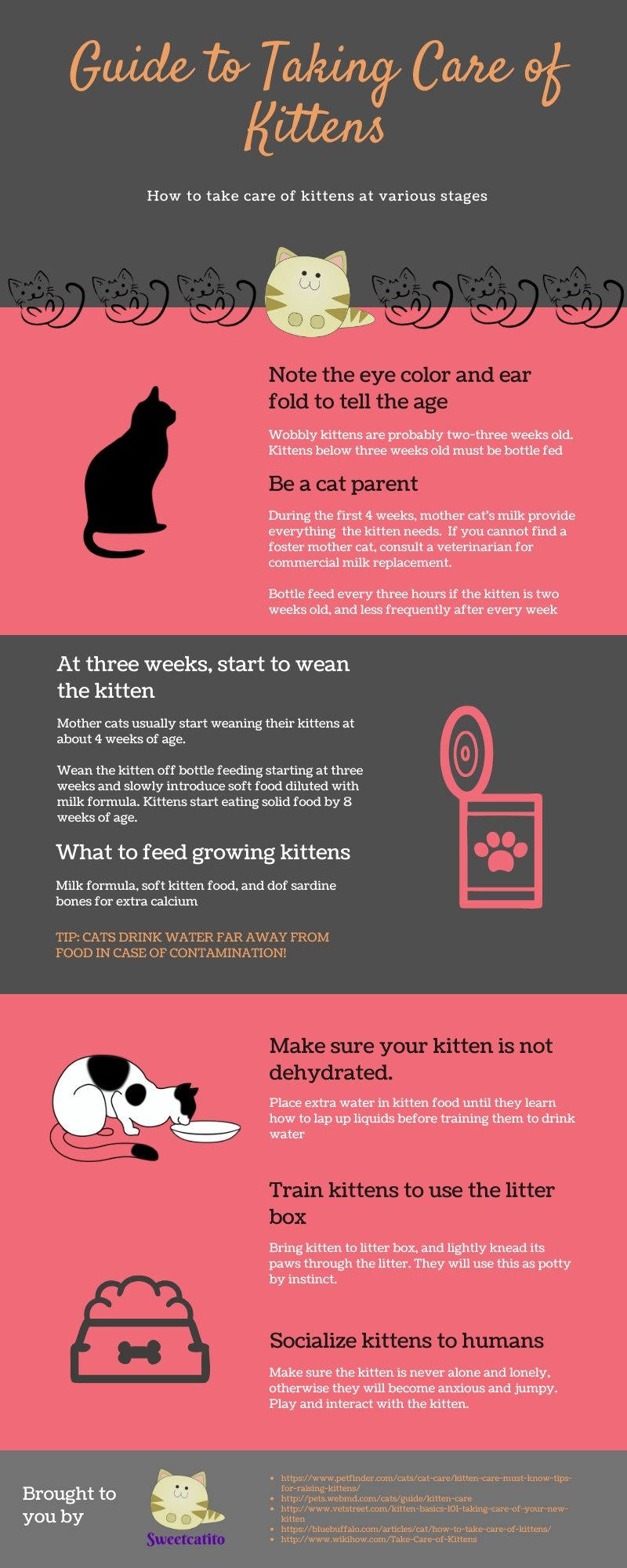 how to take care of kittens