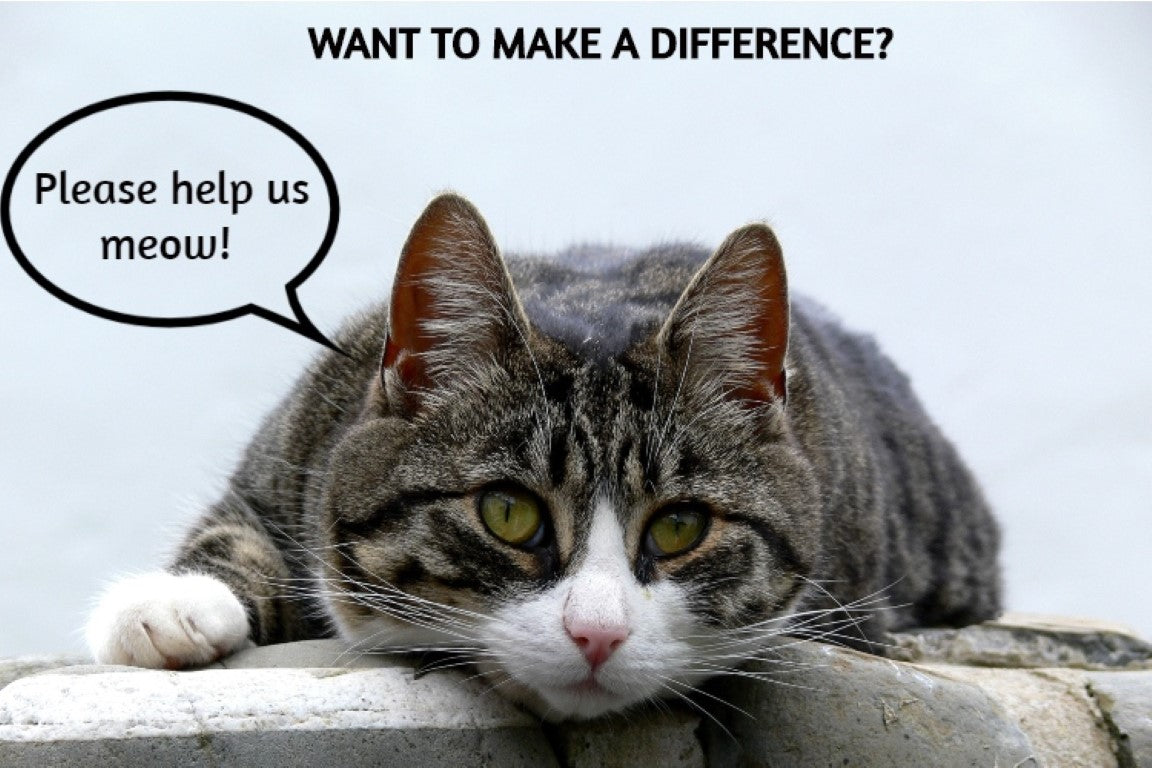 donate to animal shelters