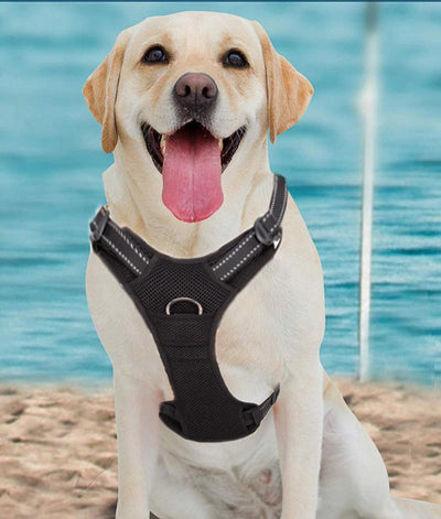 Truelove Pet Dog Harness Large