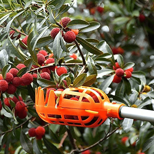 GladGarden Fruit Harvesting Picker - Eden Home & Garden