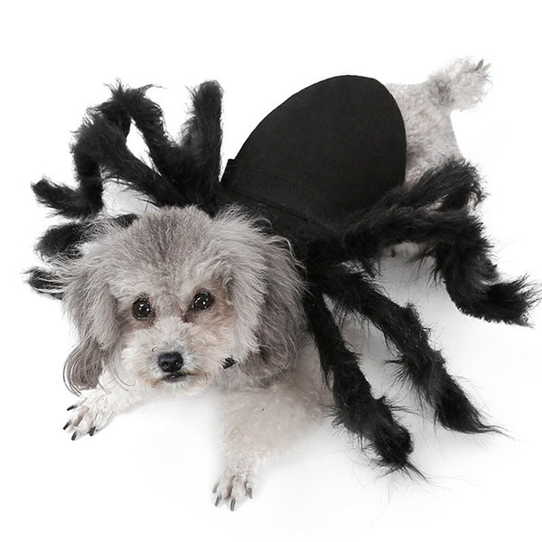 Funny Halloween Spider Costume For Pet Cat Or Dog