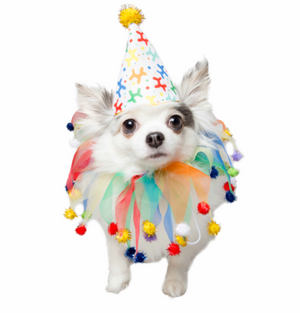 Pet Krewe Birthday Celebration Pet Costume