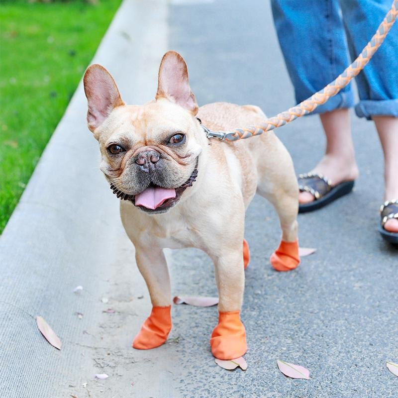 Waterproof Dog Shoes for Paw Protection
