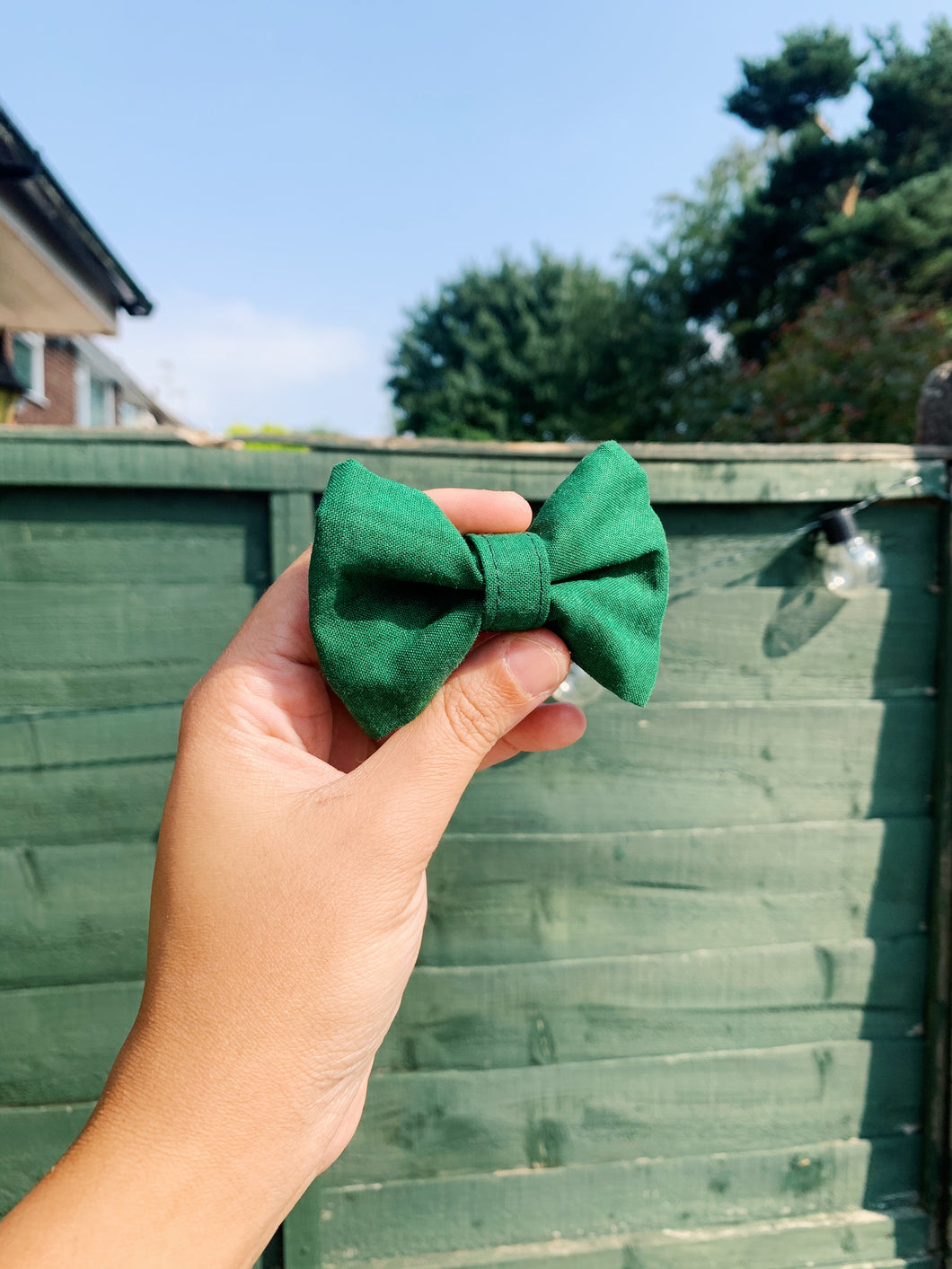 CONIFER | BOW TIE