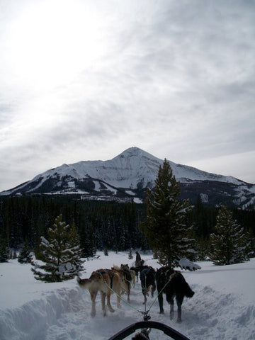 Dogsledding Picture