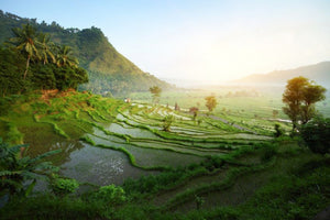 Bali Qi Gong and Absolute Nature 14 Day Retreat Journey