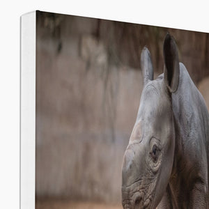 BABY KASULU EASTERN BLACK RHINO - CANVAS