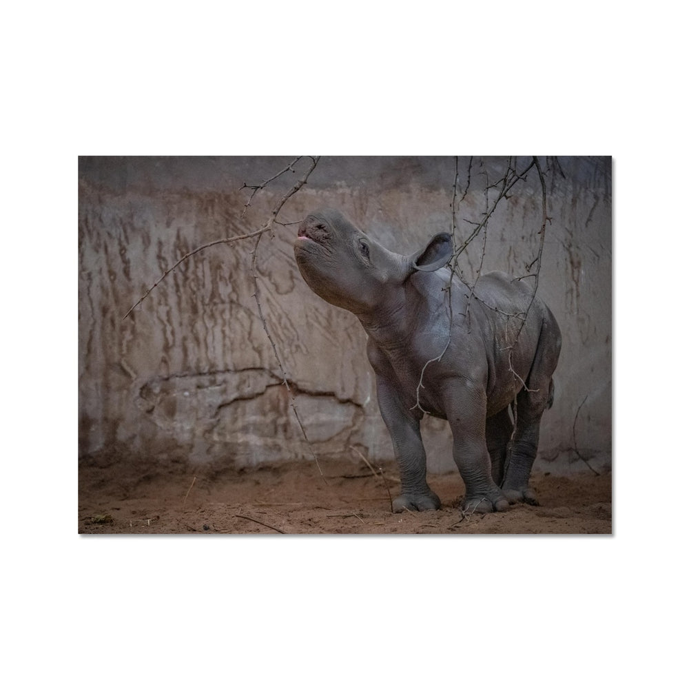 BABY KASULU WITH BRANCH - FINE ART PRINT