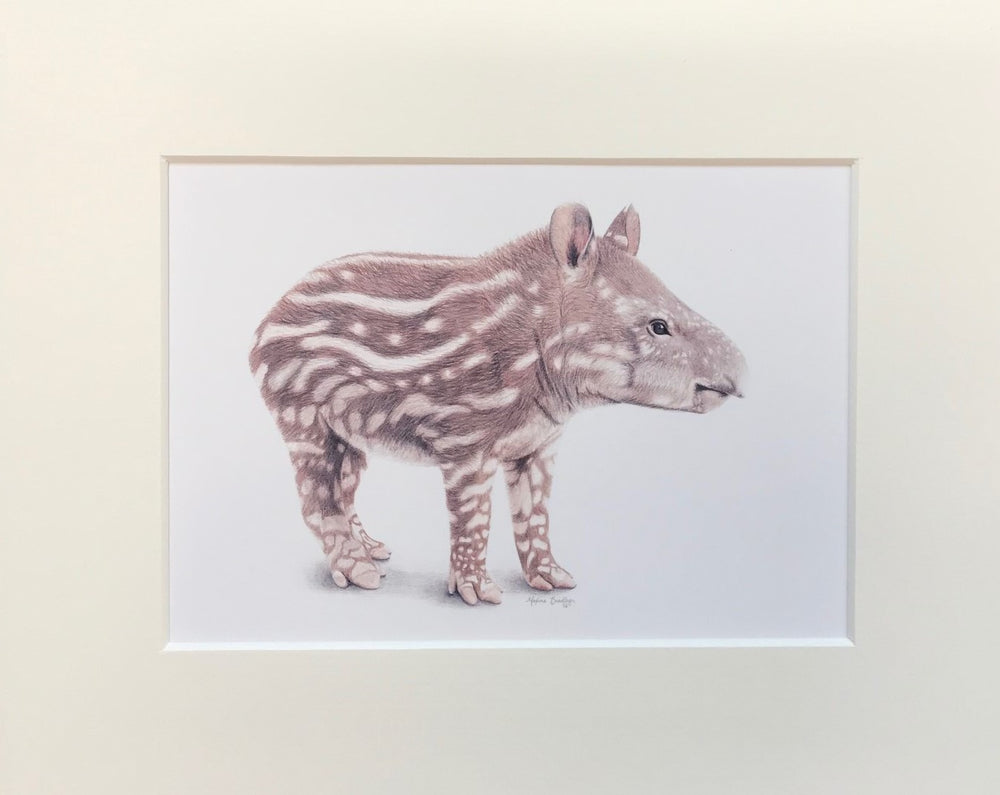"Load image into Gallery viewer, Maxine Bradley 10x8"" Mounted Print - Tapir"
