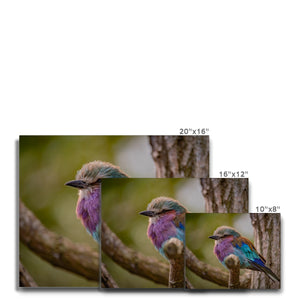 LILAC ROLLER - PRINTED FOR YOU CANVAS