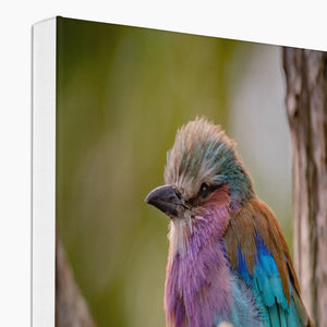 Load image into Gallery viewer, LILAC ROLLER - PRINTED FOR YOU CANVAS