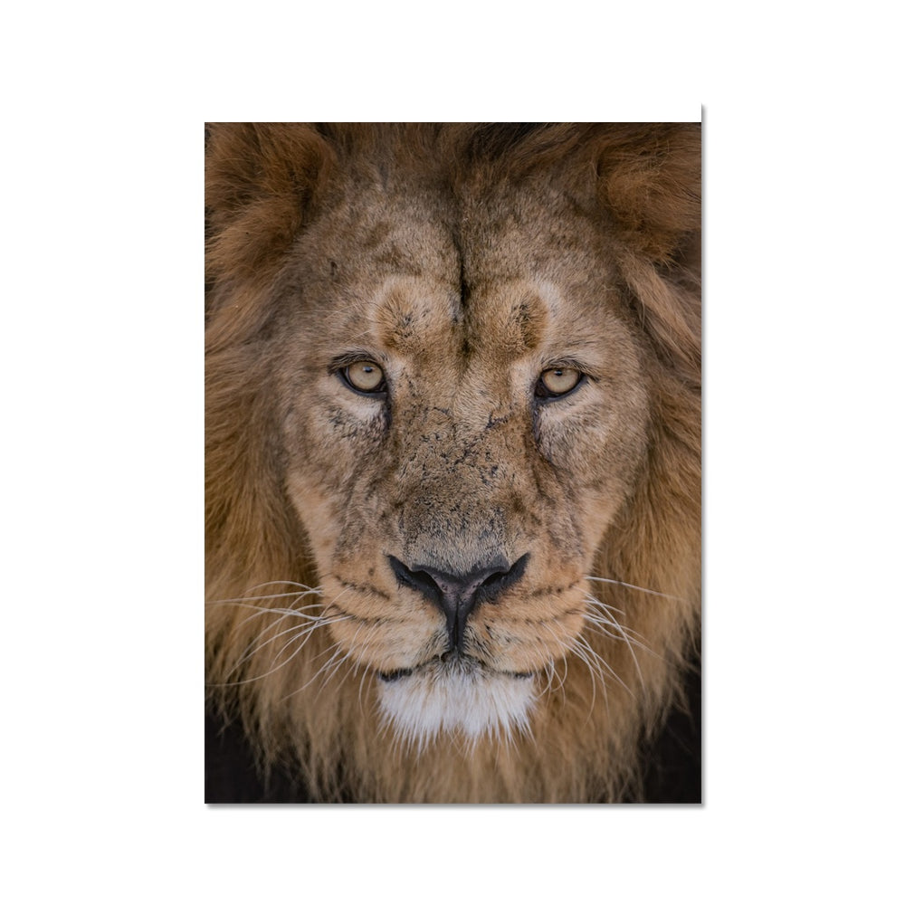 IBLIS OUR MALE ASIATIC LION - PRINTED FOR YOU