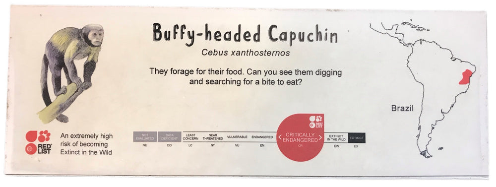 Buffy-headed Capuchin ID Sign Landscape