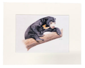 "Load image into Gallery viewer, Maxine Bradley 10x8"" Mounted Print - Sun Bear"