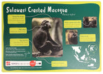 Sulawesi Crested Macaque Sign
