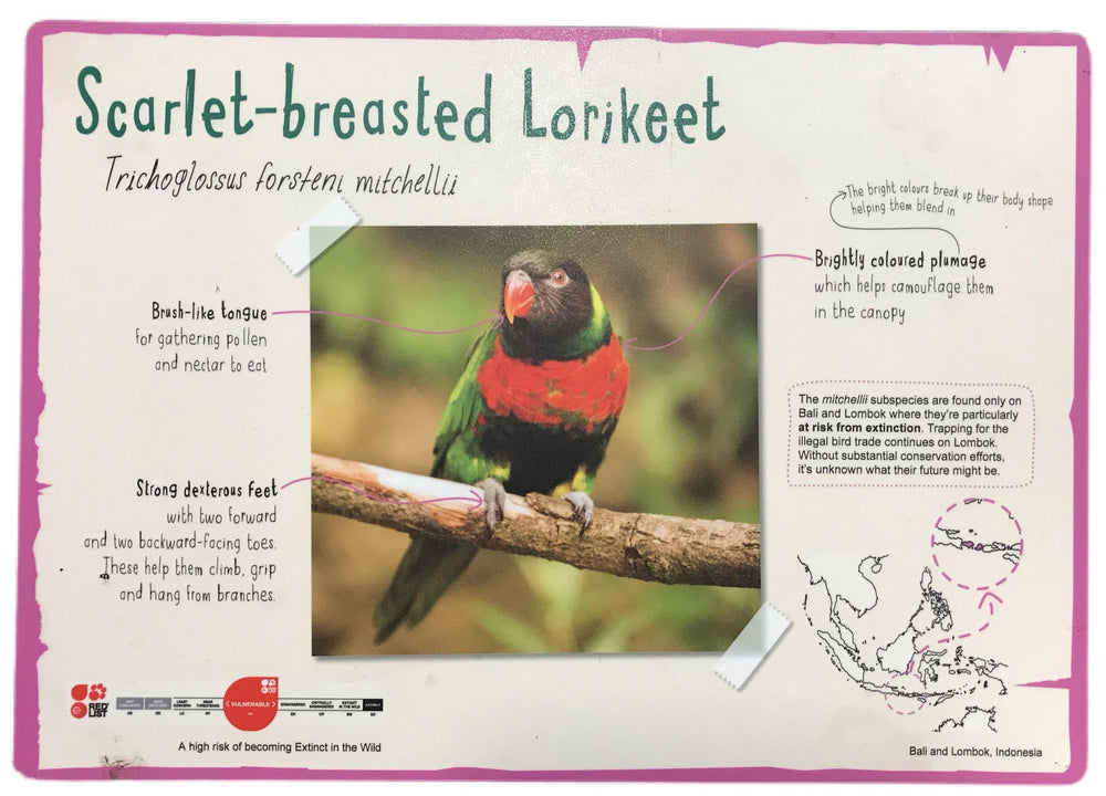 Scarlett-breasted Lorikeet Sign