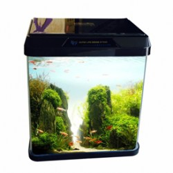 Oblong Glass Aquarium R 180