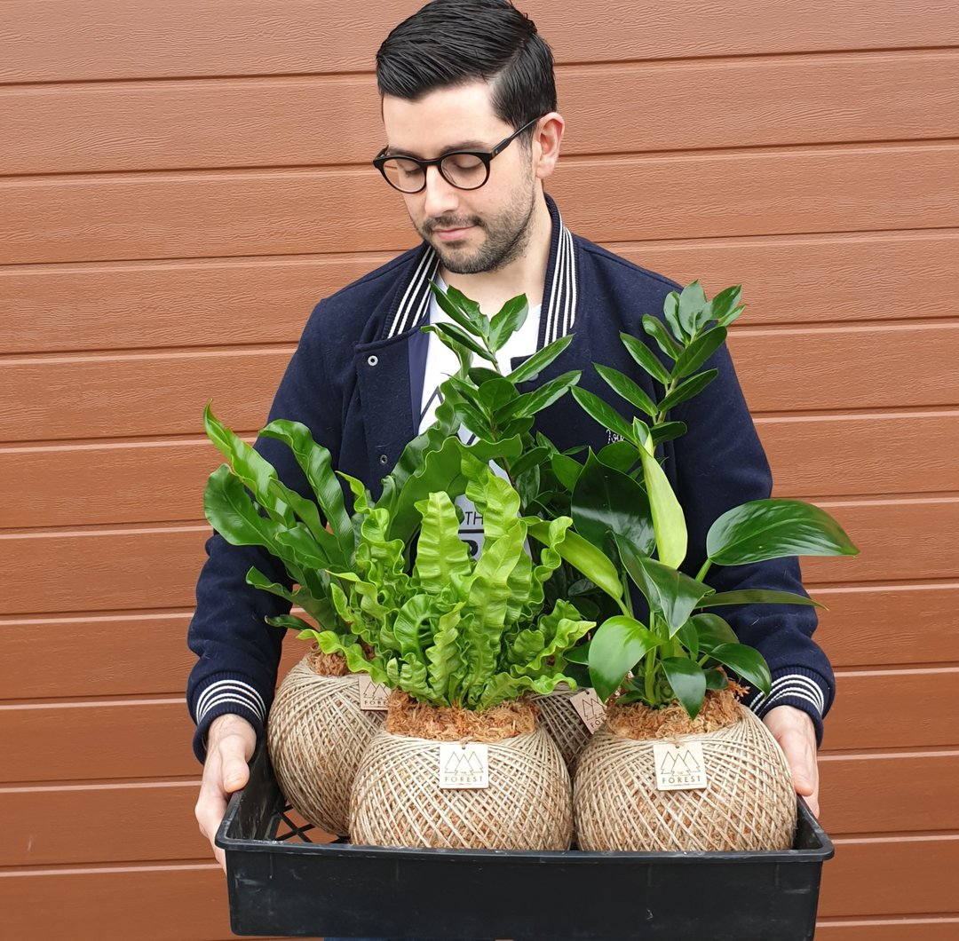 The Forest Collection - Geelong Small Business