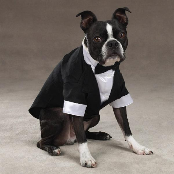 Yappily Ever After Groom Tuxedo - Furry Friend Frocks