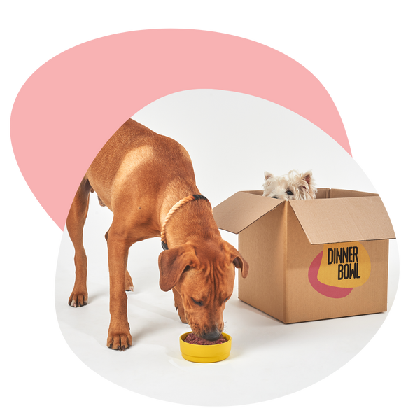 two dogs with Dinner Bowl food box