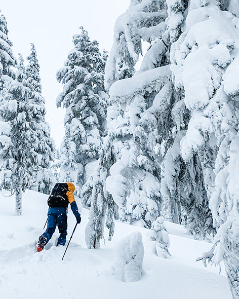 Skinning into the snow covered trees.
